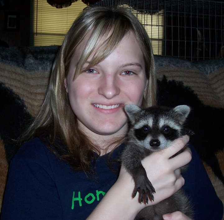 raccoon in foster care