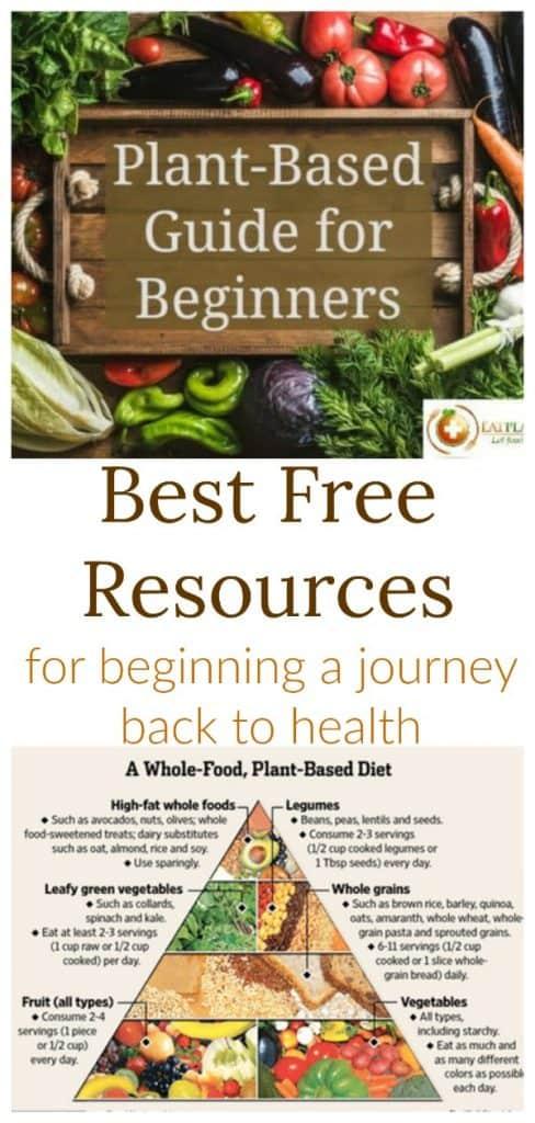 Plant Based Diet Beginners Guide
